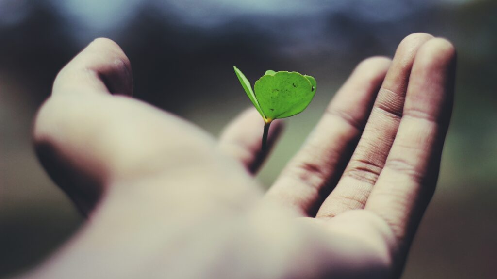 Holding a small, growing plant in the palm of a hand